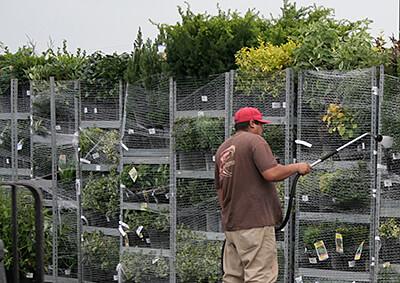 Nursery Worker Watering Plants on EZRacks